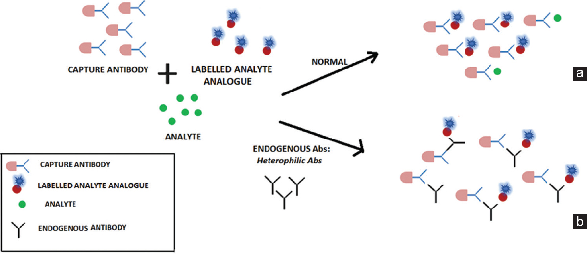 Figure 1: Mechanism of interference from endogenous antibodies in a competitive immunoassay. (a) Competitive immunoassay without any interference resulting in a true positive or true negative result. (b) Cross-linking of capture and labelled analyte analogue in the presence of endogenous antibody, resulting in false-positive or false-negative result
